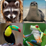 Animals Memory Game APK (MOD, Unlimited Money) 2.0
