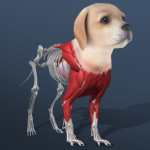 Idle Pet – Create cell by cell APK (MOD, Unlimited Money) 4.1