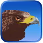 Eagle Hunting Journey APK (MOD, Unlimited Money) 1.53