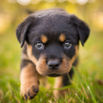 Rottweiler Dog Simulator APK (MOD, Unlimited Money) 1.0.4