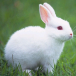 Talking Rabbit APK (MOD, Unlimited Money) 1.1.5