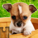Dogs Jigsaw Puzzles Game – For Kids & Adults 🐶 APK (MOD, Unlimited Money) 27.0