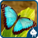 Butterfly Jigsaw Puzzles APK (MOD, Unlimited Money) 1.9.0