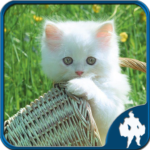 Cats Jigsaw Puzzles APK (MOD, Unlimited Money) 1.9.0