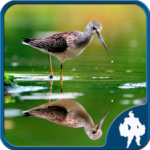 Reflection Jigsaw Puzzles APK (MOD, Unlimited Money) 1.9.17