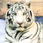Wild White Tiger: Jungle Hunt 2021 APK (MOD, Unlimited Money) 1.6