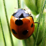Insects Jigsaw Puzzles APK (MOD, Unlimited Money) 2.10.7